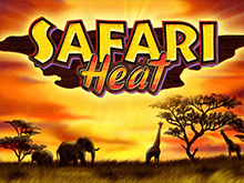 Бонусы для игры в Safari Heat